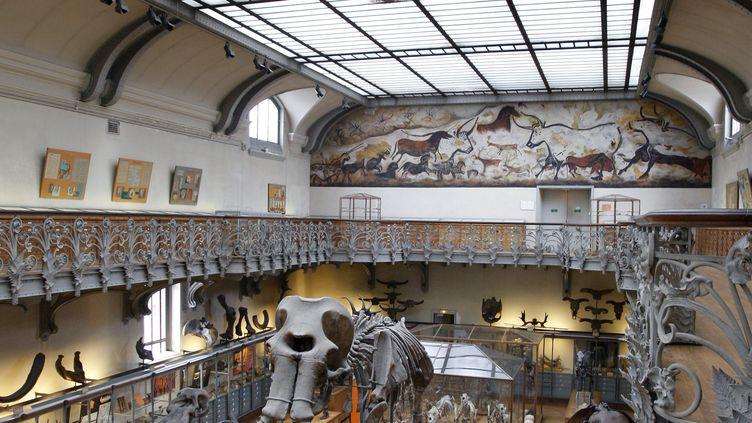 La galerie de paléontologie que le Muséum national d'histoire naturellede Paris prévoit de rénover. (PATRICK KOVARIK / AFP)