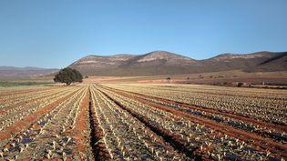 Des champs près deCortijo del Fraile, dans la province d'Almeria, en Andalousie, dans le sud de l'Espagne, le 28 mai 2018. (MANUEL COHEN / AFP)