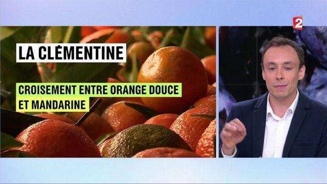 Alimentation : la fraise gariguette, des laboratoires à l'assiette