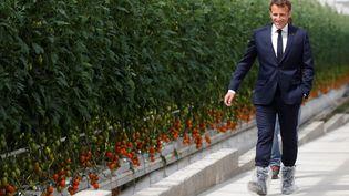 Emmanuel Macron visiteles allées des vastes serres de tomates de l'exploitation des frères Roué, à Cléder (Finistère), le 22 avril 2020. (STEPHANE MAHE / AFP)