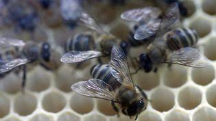 Les abeilles délaissaient les fleurs des prés et allaient trainer leurs pattes dans des déchets sucrés de bonbons colorés. (SERGEY MAMONTOV / RIA NOVOSTI / AFP )