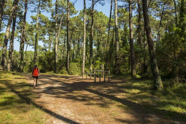 La forêt de Chiberta, au cœur d'Anglet (Pyrénées-Atlantiques), le 21 août 2018. (PASQUINI CEDRIC / HEMIS.FR / AFP)