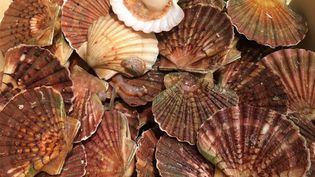 Coquilles Saint-Jacques de Chausey (Normandie), à la poissonnerie de Terroir d'Avenir, à Paris.  (Laurent Mariotte / Radio France)