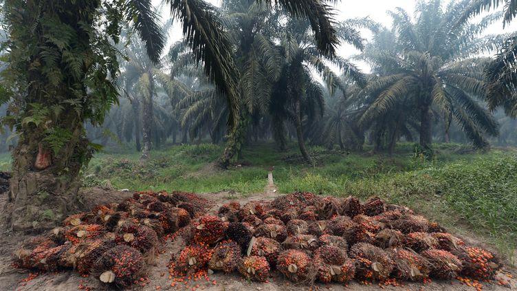 Des graines de palmiers à huile extraites dans une plantation d'Indonésie. (ADEK BERRY / AFP)