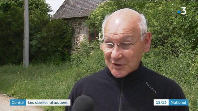 Une nonagénaire attaquée par des abeilles dans le Cantal
