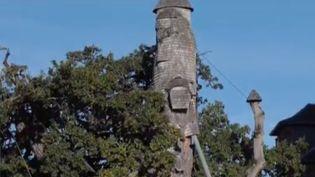 France 2 vous emmène mercredi 22 septembre dans son 13 Heures à la découverte d'un arbre pas comme les autres : le chêne millénaire d'Allouville-Bellefosse (Seine-Maritime). (FRANCE 2)