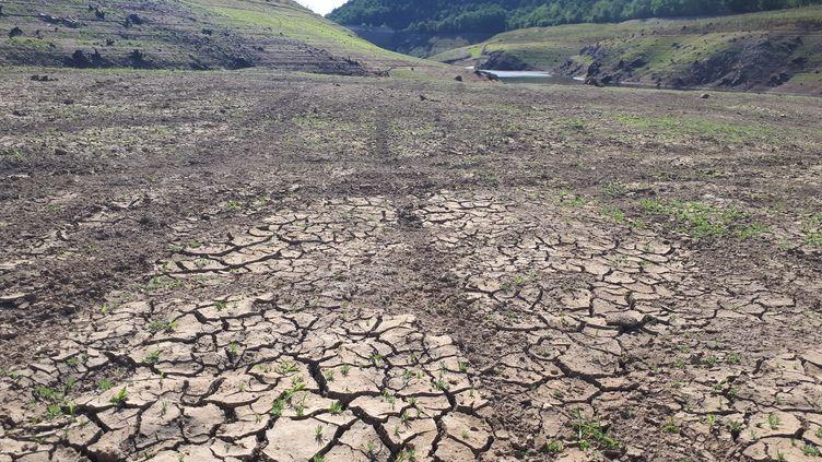Barrage de la Sep, barrage d'irrigation à sec, victime du manque de pluie. Saint-Hilaire-la-Croix (Puy-de-Dôme), 21 août 2019. (JULIETTE MICHENEAU / FRANCE-BLEU PAYS D'AUVERGNE / RADIO FRANCE)