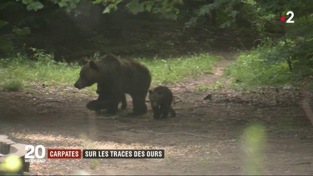 Roumanie : sur les traces des ours