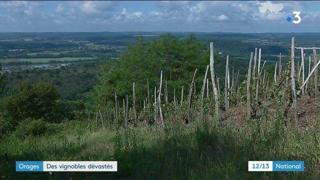 Orages : des vignobles dévastés par la grêle