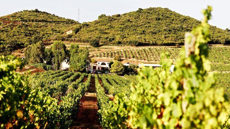 Près de 70% des vins corses sont des rosés. Produits sur des vignobles ouverts sur la Méditerranée, ils allient souvent finesse et caractère. (AJACCIO-TOURISME / MATHIEU DROUET)