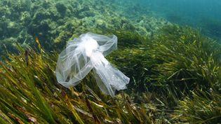 Un sac plastique a été observé en mai 1998 à plus de 10 km de profondeur, dans la fosse des Mariannes (océan Pacifique). Image d'illustration (_548901005677 / MOMENT OPEN)