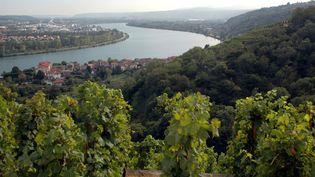 Des vignes à Condrieu (Rhône), en 2013. (CRONENBERGER - ANA / ONLY FRANCE / AFP)
