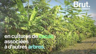 VIDEO. Connaissez-vous l'agriculture régénératrice ? (BRUT)