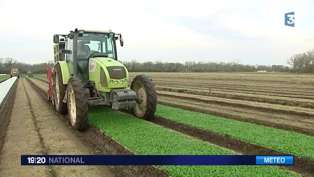 Hiver trop doux : surproduction de légumes, il faut jeter
