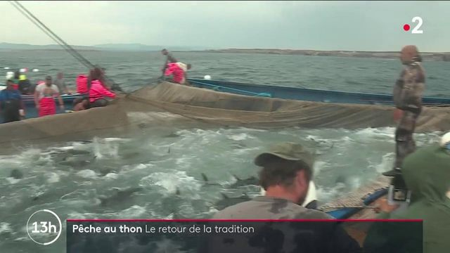 Sardaigne : la tradition de la pêche au thon perdure