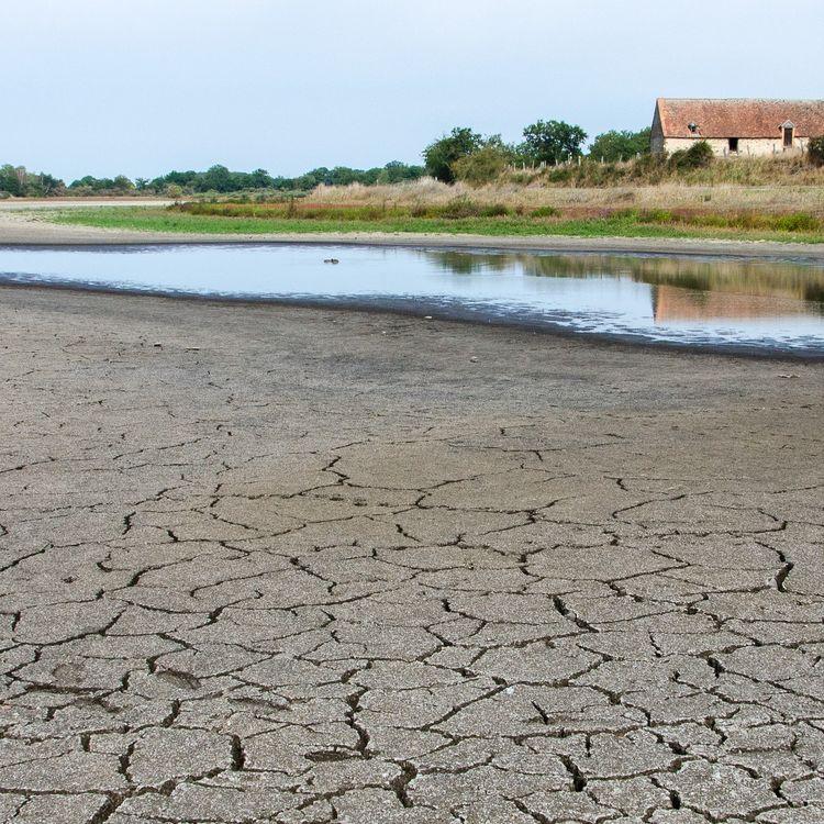 L'étang des Landes, le 27 août 2019 à Lussat (Creuse). (THOMAS BAIETTO / FRANCEINFO)