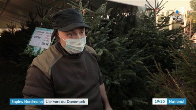 Noël : le sapin Nordmann, succès danois et chouchou des Français