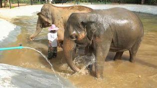 En Thaïlande, un Français est à l'initiative d'un label pour repérer les camps qui protègent les éléphants. Les pachydermes, espèce populaire auprès des touristes, sont souvent maltraités et exploités. (France 2)