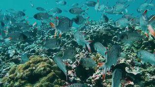 Seychelles : un patrimoine marin sanctuarisé (France 2)