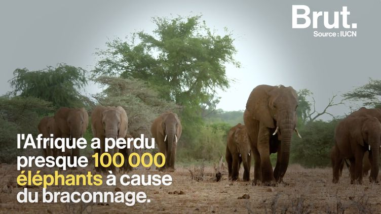 VIDEO. Le réalisateur Jon Kasbe se confie sur son film qui traite du braconnage au Kenya (BRUT)