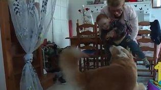 Un chien d'aveugle dès le plus jeune âge (FRANCE 3)