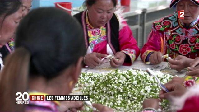 Chine : les femmes abeilles