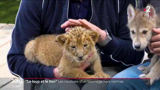 """Cinéma : dans les coulisses du tournage hors normes du film """"Le loup et le lion"""""""