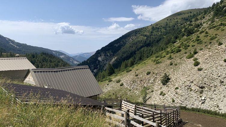 L'enclos où est gardé letroupeau de près de 1 200 brebis,sur les hauteurs de Prads, dans les Alpes-de-Haute-Provence, mardi 28 juillet. (MATHILDE VINCENEUX / RADIOFRANCE)