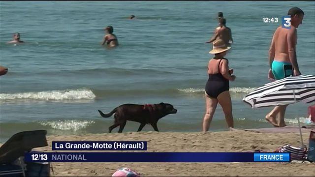 Les chiens à la plage : la galère des propriétaires