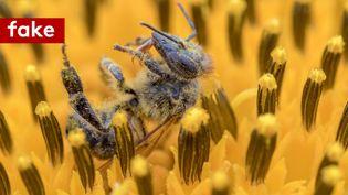 Non, Einstein n'a jamais fait de citation à propos des abeilles. (FRANCEINFO)