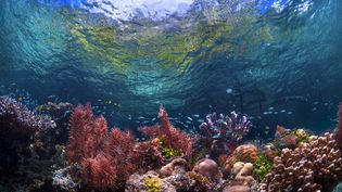 Un récil corallien en Indonésie, le 31 octobre 2016 (BETH WATSON / MOMENT RF / GETTY IMAGES)