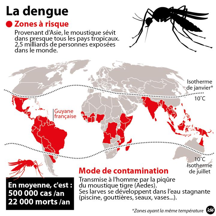(la dengue : zones à risque, modes de contamination... © Idé)