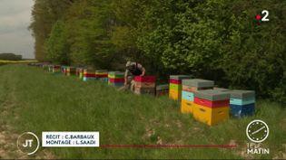 Un apiculteur dans le Loiret. (France 2)
