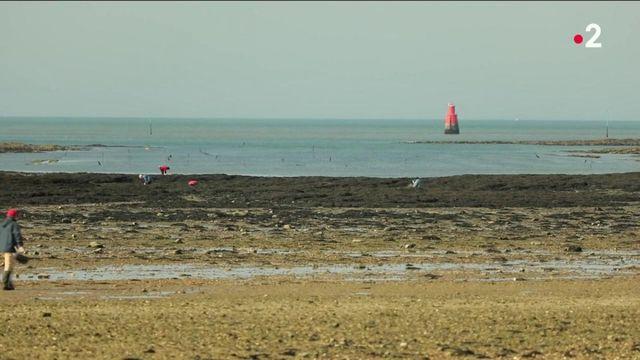 Morbihan : les grandes marées, le bonheur des pêcheurs-promeneurs
