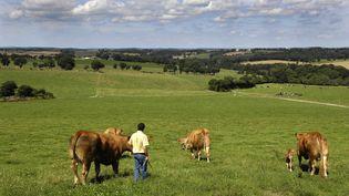 Des vaches dans un pré gardées par un fermier. (VILLAREAL / BSIP)