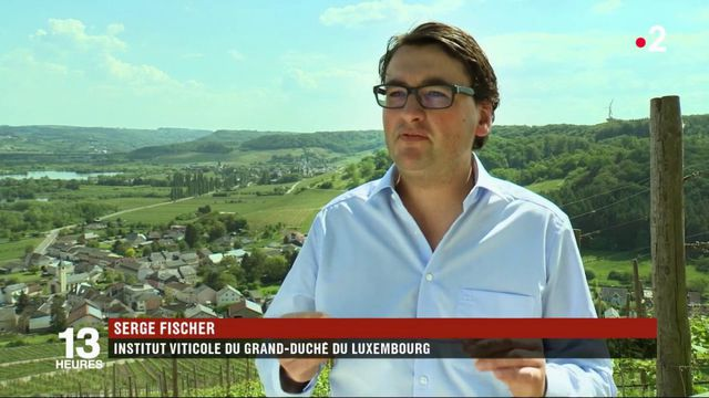 Luxembourg : des vignerons ont décidé de se passer des pesticides