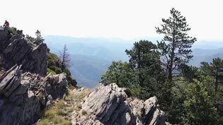 Cévennes : à la découverte du Mont Aigoual, paradis des amoureux de la nature (France 2)