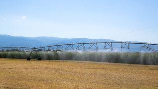 L'arrosage d'un champ à Valence, dans la Drôme, le 16 juillet 2019. (NICOLAS GUYONNET / HANS LUCAS / AFP)