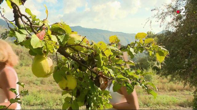 Cosmétiques : des produits de beauté à base de fruits et légumes invendus
