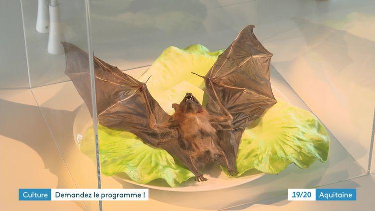 L'exposition Disgusting Food Museum à Bordeaux (France 3 Aquitaine)