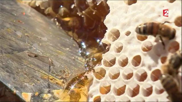 Le miel, trésor du terroir