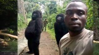 Une photo fait en ce moment le tour du monde : celle d'un garde-forestier et de deux gorilles se tenant droits comme des hommes dans un parc au Congo. Derrière ce cliché étonnant se joue une histoire de survie pour cette espèce menacée. (FRANCE 3)