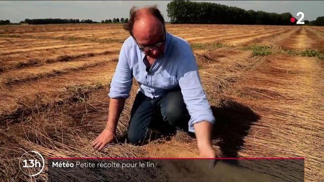 Agriculture : petites récoltes pour le lin