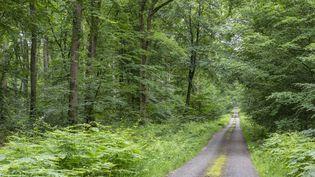 La forêt de Tronçais, dans l'Allier. (GUY CHRISTIAN / HEMIS.FR)