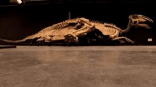 Squelette de dinosaure exposé au Paléospace de Villers-sur-Mer  (France 3 / Culturebox)