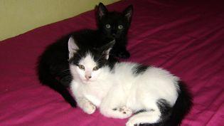 (Une semaine de pension complète haut de gamme pour les chats coûte une centaine d'euros © Maxppp)