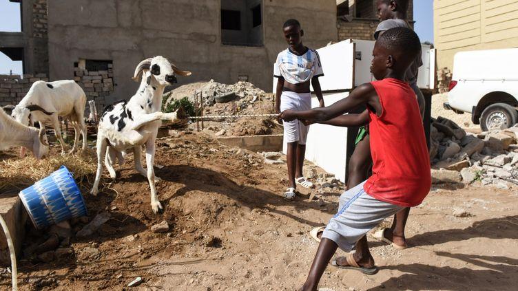 Un gamin tente de domestiquer une chèvre au premier jour de la célébration de la fête de l'Aïd à Oukam, banlieue de Dakar, le 11 août 2019. (SEYLLOU / AFP)
