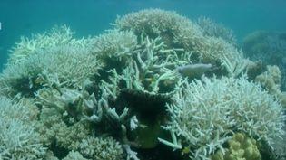 La Grande Barrière de corail en Australie. (CAPTURE ECRAN YOU TUBE)