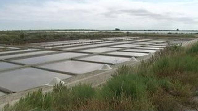 Île de Ré : très bonne récolte de sel en perspective !
