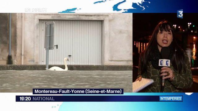 Inondations en Seine-et-Marne : le niveau de la crue de juin 2016 bientôt atteint